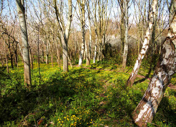 Millennium Wood Stowey Green Spaces